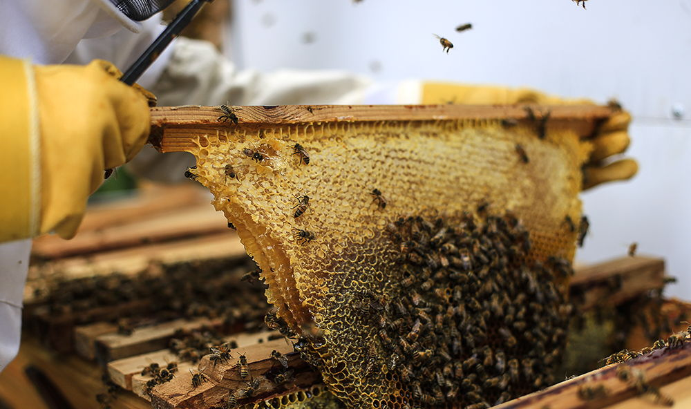 Beginning Beekeeping with Albert Chubak