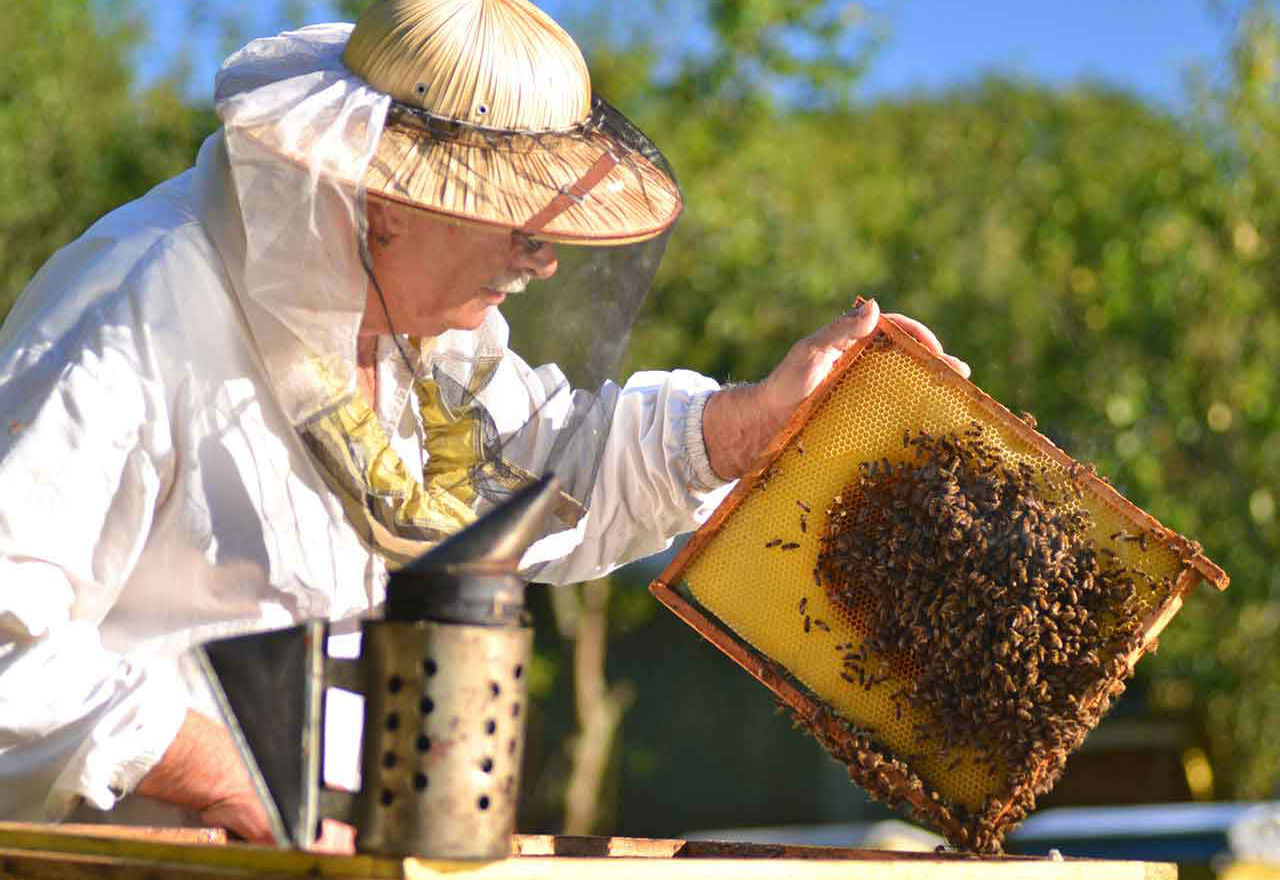 intermediate-beekeeping-courses.jpg