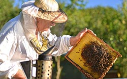 Intermediate Beekeeping