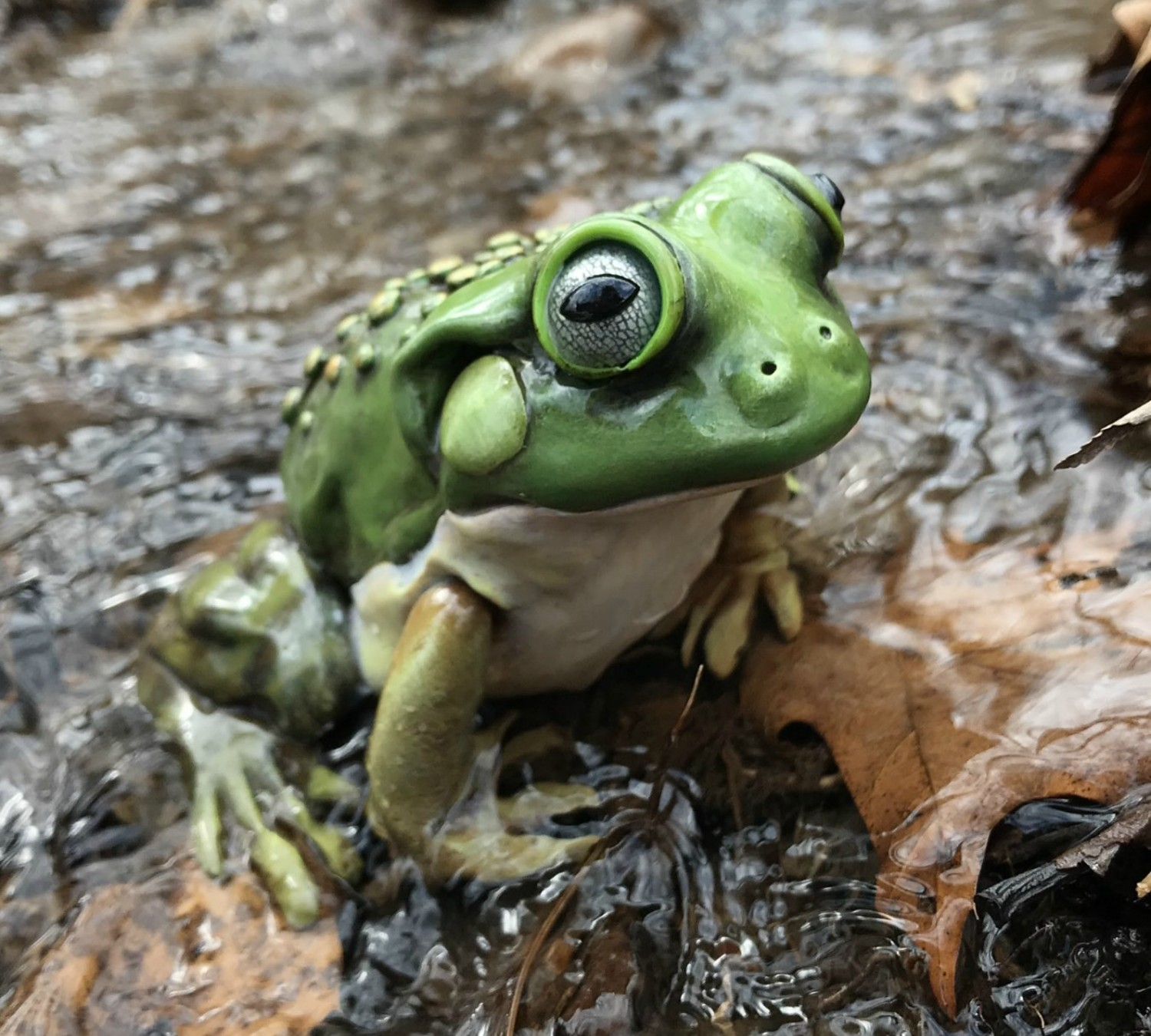 Sculpting a Polymer Clay Frog in a Pond LIVE with Melissa Terlizzi