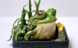 Sculpting a Polymer Clay Frog in a Pond