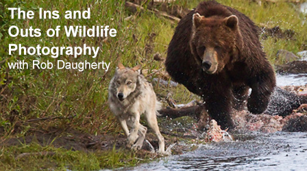 The Ins and Outs of Wildlife Photography with Rob Daugherty